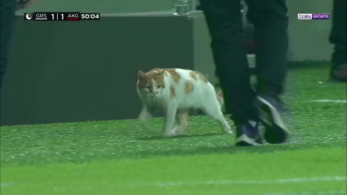 ICYMI: Cat invades soccer pitch in Turkey as players break their Ramadan fast during a match 🐈 https://t.co/16Ab02FsUo