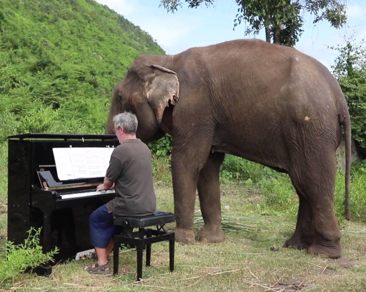 Take a classical music break with Romsai, a partially blind elephant. (via Paul Barton) →