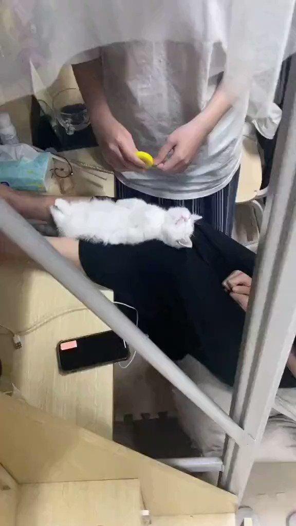 ピーンと伸びた猫!寝ているすきに身体測定を!しかし、途中で起きてしまったw