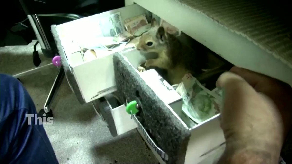 This squirrel ferociously guards its rescuer's cash box at a shop in Turkey https://t.co/PcU9rEjkkm