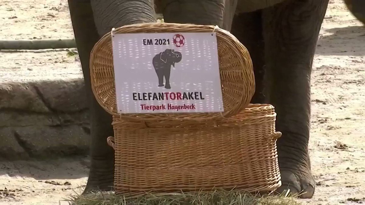Yashoda the elephant predicts a draw for Germany in their next #EURO2020 match against Hungary https://t.co/ZZApq709Iu https://t.co/b3RPlIozo0