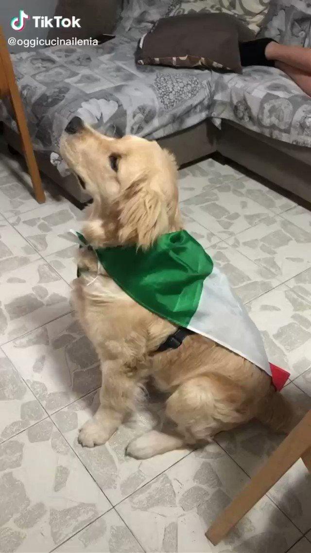 This dog watching the Italian national anthem 😂🇮🇹  (via oggicucinailenia/TT) https://t.co/QQST0yEAxD