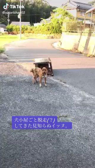 犬小屋ごと脱走は草   https://t.co/JZTjE8KM6d