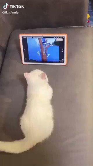 手汗がすごい猫ちゃんwwwww   https://t.co/gul5aSDgTE