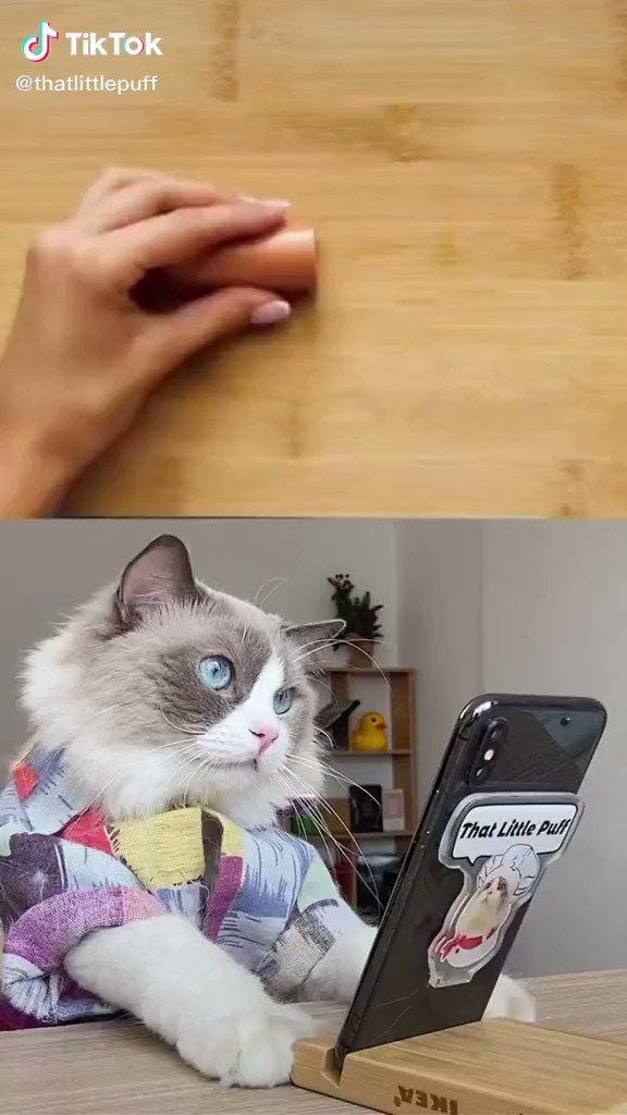 料理動画で学ぶ猫さん、料理にチャレンジするの巻 https://t.co/o1djzRypdN