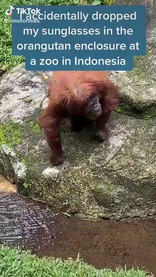 落としたサングラスを見つけた猿の反応wwww   https://t.co/lEJDeOztPl
