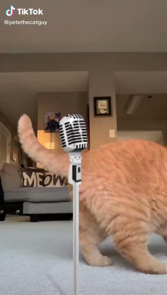 ボヘミアンラプソディを歌う猫 https://t.co/M1lhQh74H8