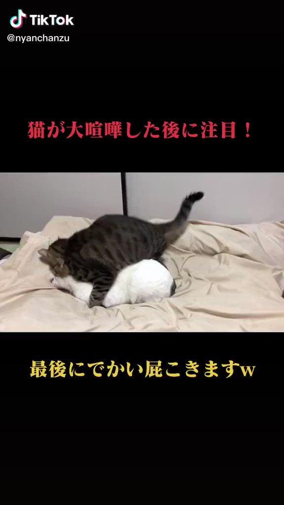 猫だもの https://t.co/ySNQgbL4WM