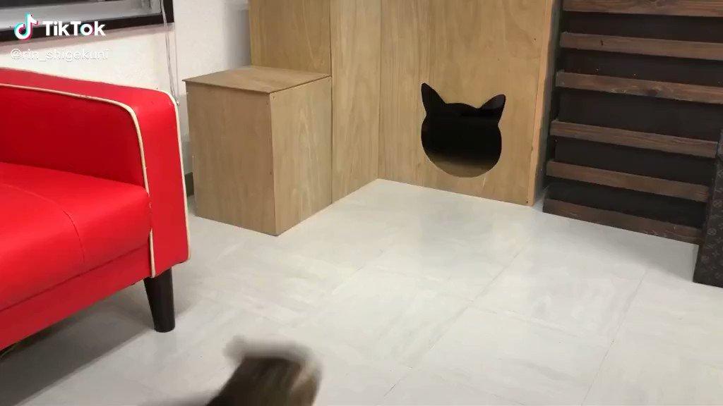 猫型の入り口がどんどん狭くなったらニャンコはどうするのか!? https://t.co/NOvKhdWcR4