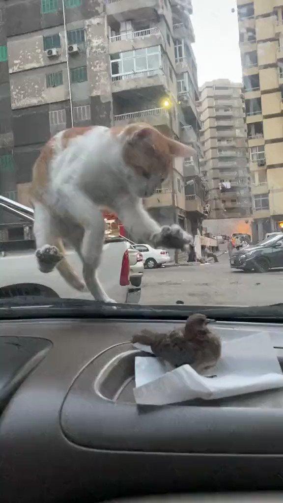 小鳥に手を伸ばすも見えない壁に阻まれる猫さん
