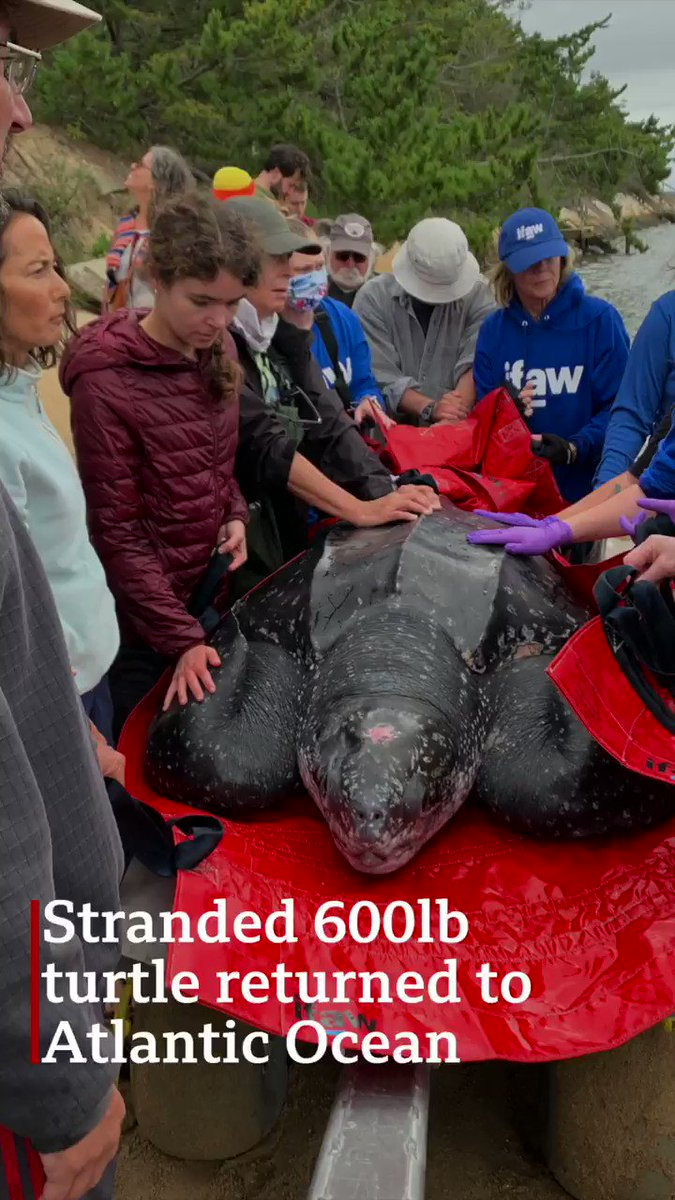 News of the leatherback rescue by @neaq and @MassAudubon is truly global! 👏👏 https://t.co/c6f2j1TkUT