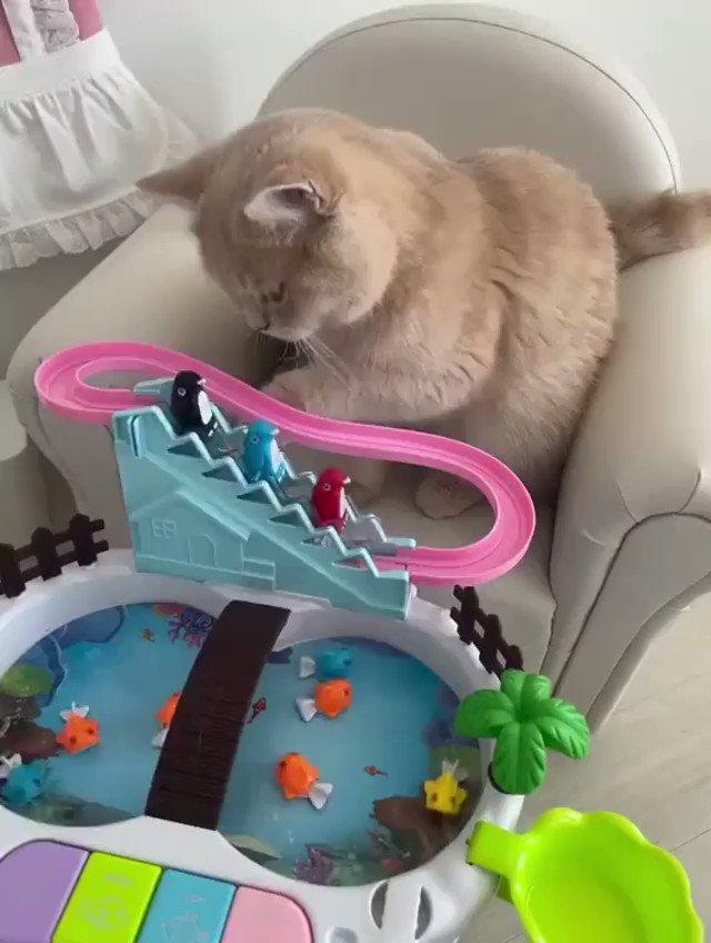 おもちゃの遊び方を完全に理解してる猫さん