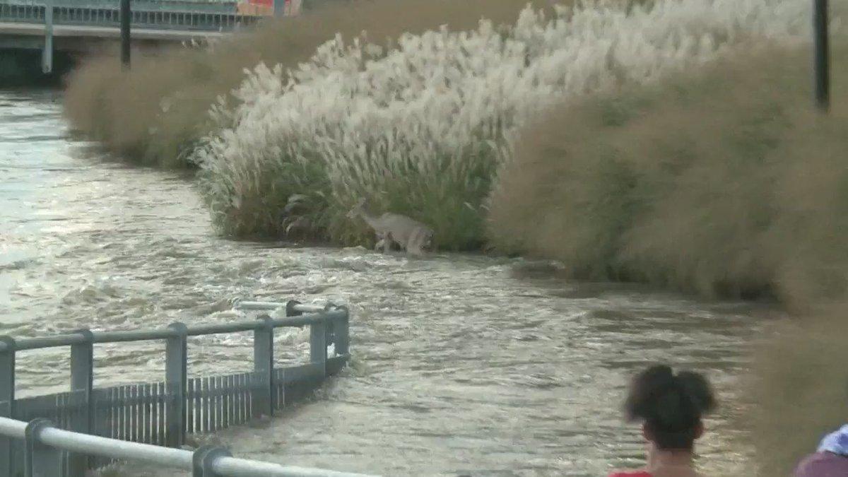 Good Samaritan saves deep trapped in swollen Iowa river.