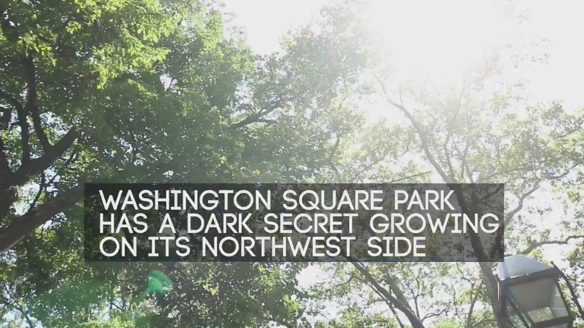HIDDEN NEW YORK: Manhattan's oldest tree is believed to hold a dark past.