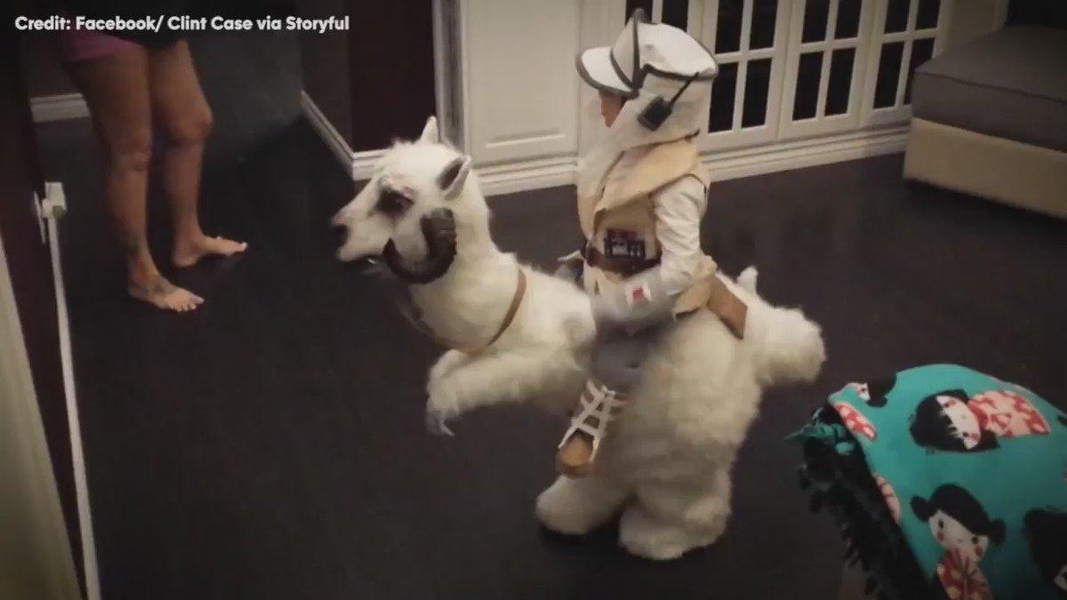 You have to see kid's StarWars Tauntaun costume