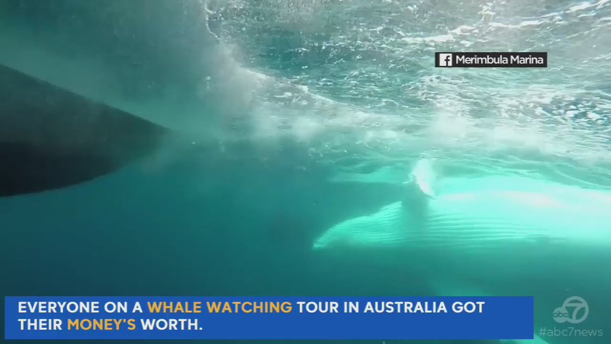 A group on a whale watching tour in Australia certainly got what they paid for.