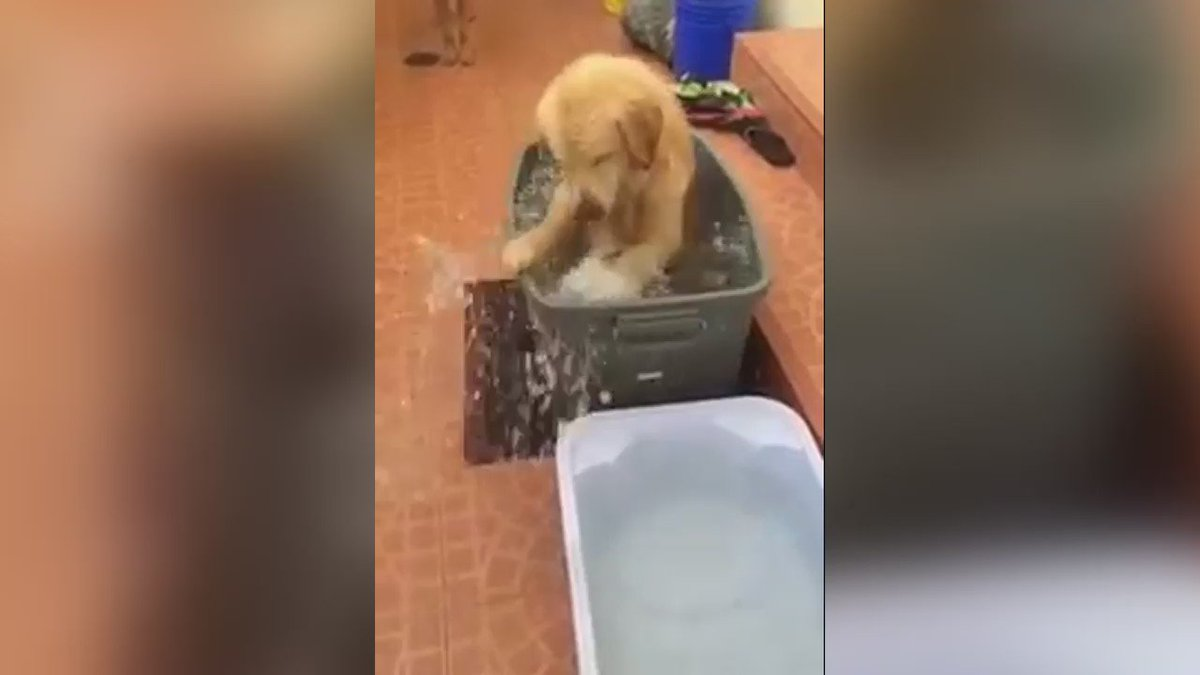 When there aren't enough bath bubbles.. https://t.co/Fox69RYTuR