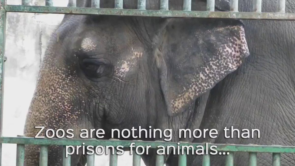 zoos pitiful dirty prisons essay Zoos – sanctuaries or prisons zoos have been popular for hundreds of years, introducing a wide variety of animals to visitors who otherwise would never have seen them times change, however , and we must question whether zoos are still relevant in a world where we wish to treat animals humanely.