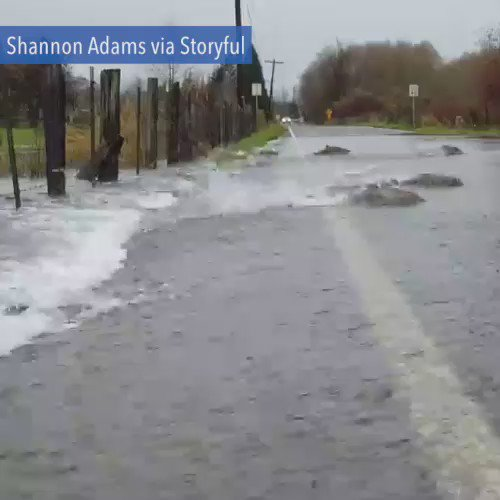 This isn't something you see every day... Salmon try to cross a flooded road in Shelton, Washington.