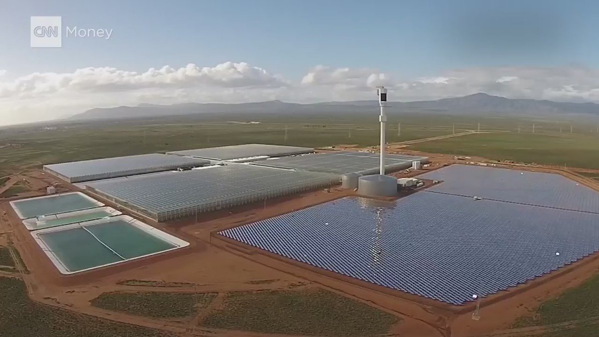 Farmers in the Australian desert are growing 15,000 tons of tomatoes using seawater — and thousands of mirrors