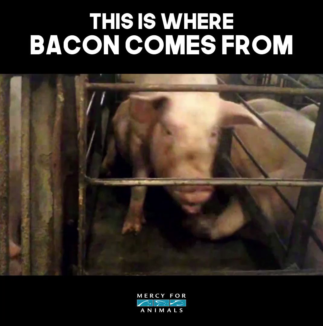 This is where bacon comes from. #SundayMorning https://t.co/4U4tx367Dl