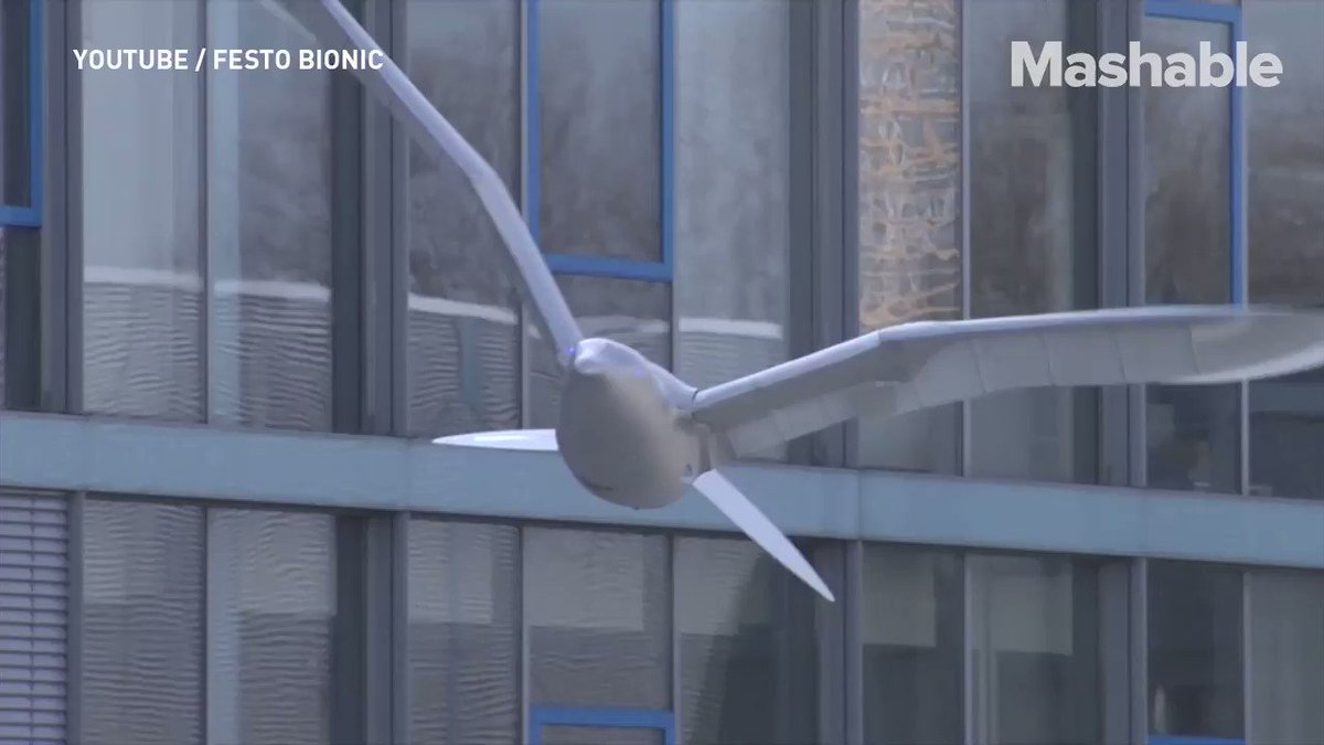 A robot bird that flies just like a real one