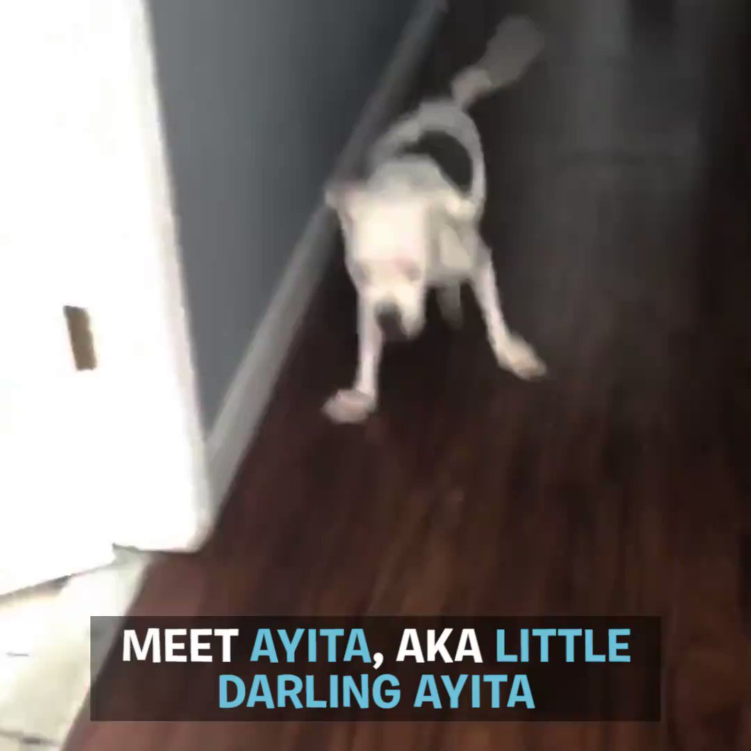 This special needs Pittie walks like shes dancing - right into our hearts!