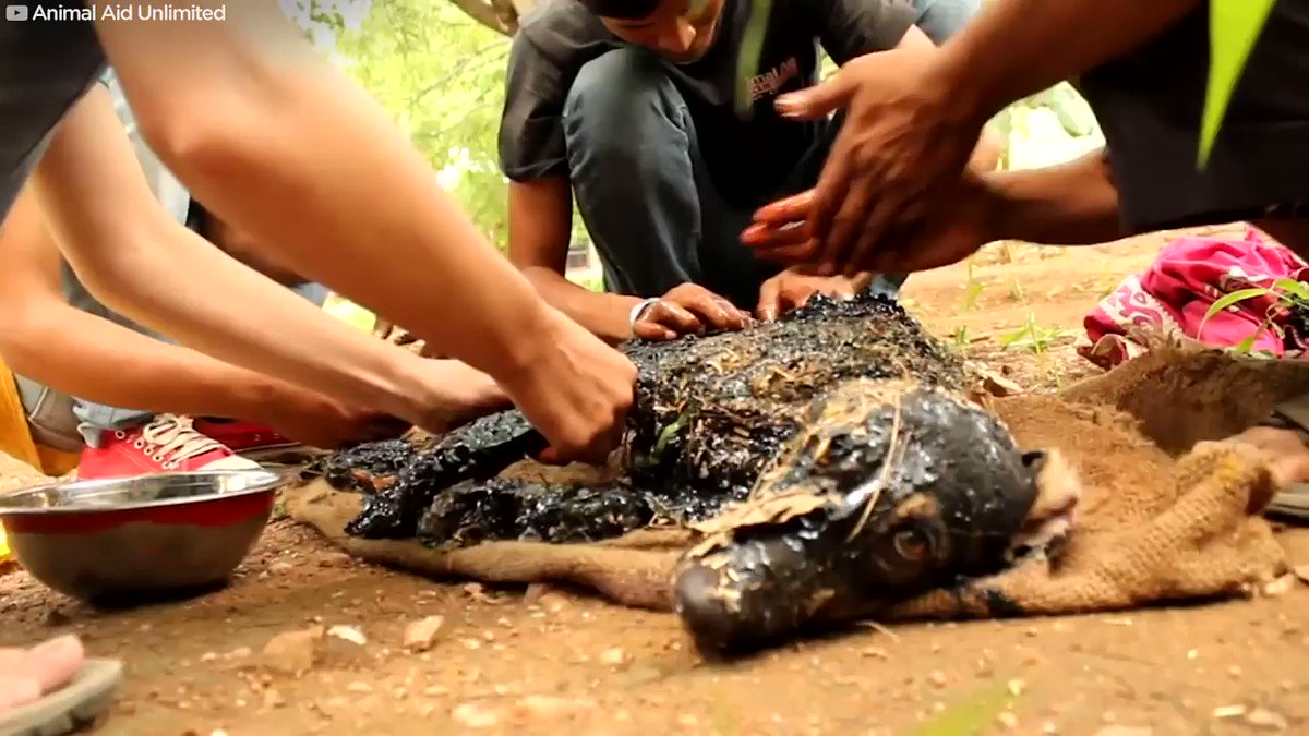 This dog fell into a pool of tar — and was stuck to the ground when rescuers found him (@AnimalAid_India)