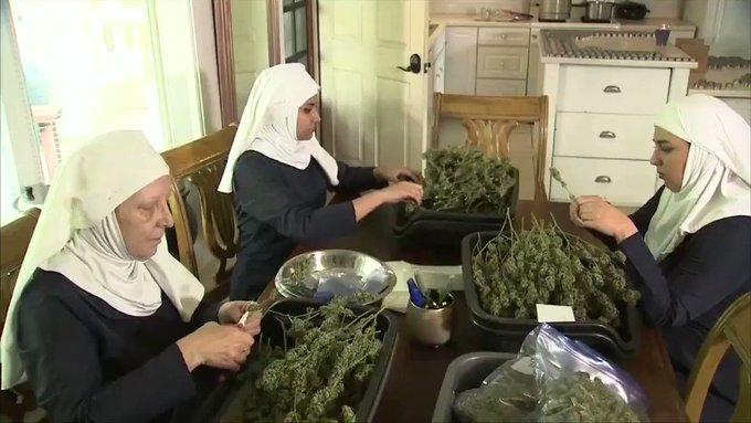 Ces 'sœurs cannabis' ont vendu pour 750.000 euros de produits l'an dernier