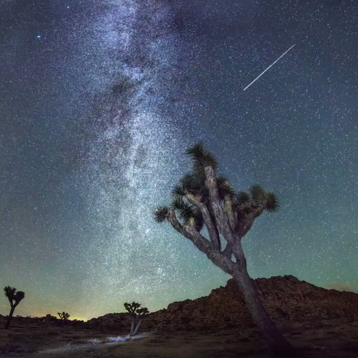From its granite monoliths to stunning vistas and unique wildlife, discover California's Joshua Tree National Park. https://t.co/bEcUZZp5hb