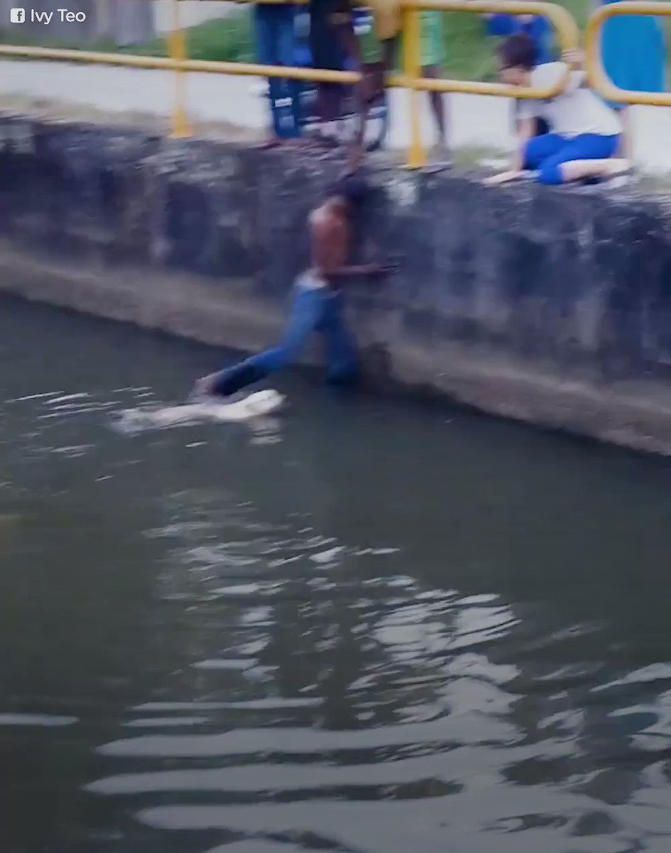 This kid rescued a dog from a canal — with his legs! 👏👏👏