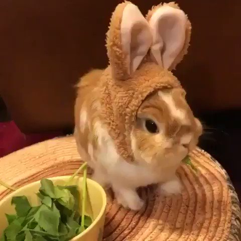 a bunny wearing bunny ears.. this is so cute 😭😭 https://t.co/NMHYECFjKU
