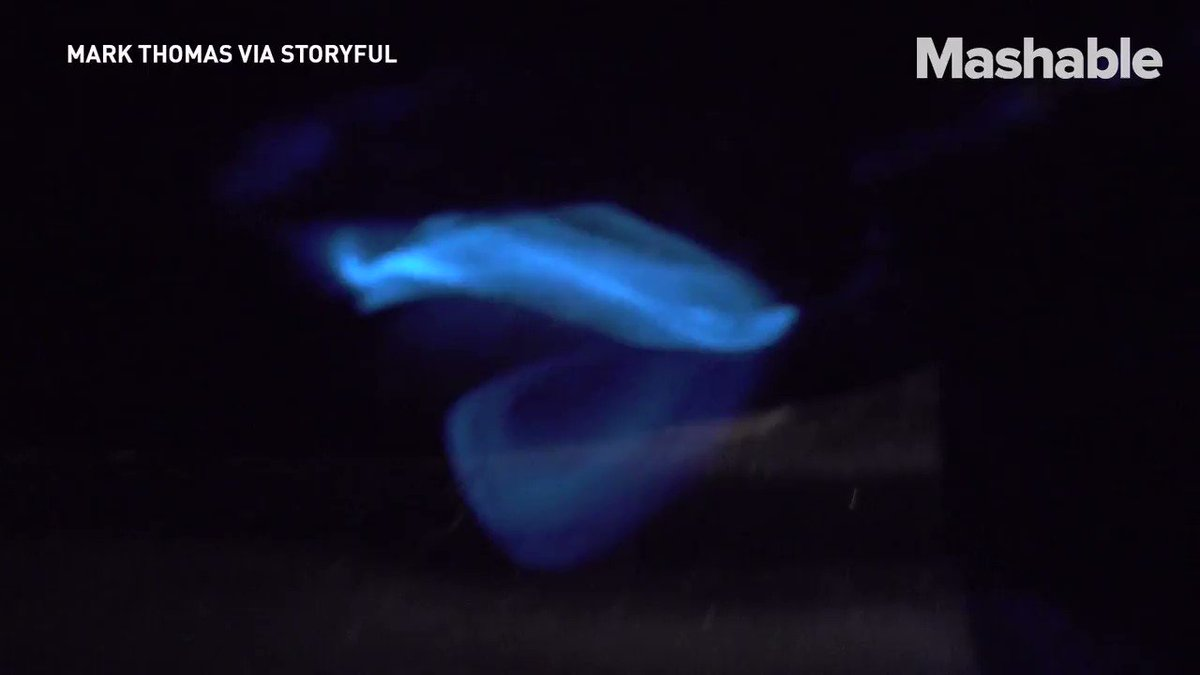 There's a very scientific reason behind the sparkle of this bioluminescent algae