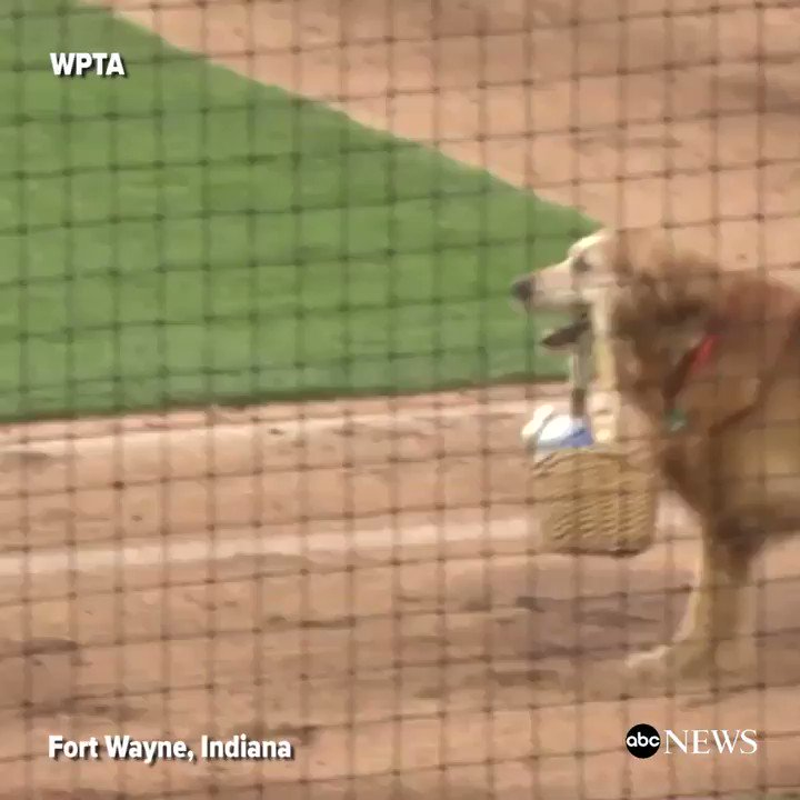 WATCH: Dog delivers water to umpires during minor league baseball game and it is all sorts of amazing and adorable.