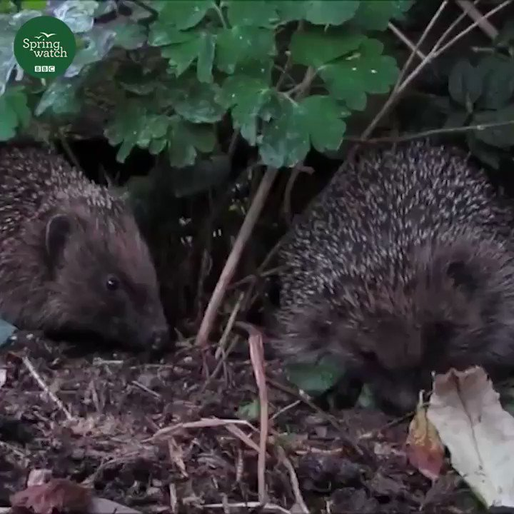 Share this with a friend, it could save a hedgehog's life