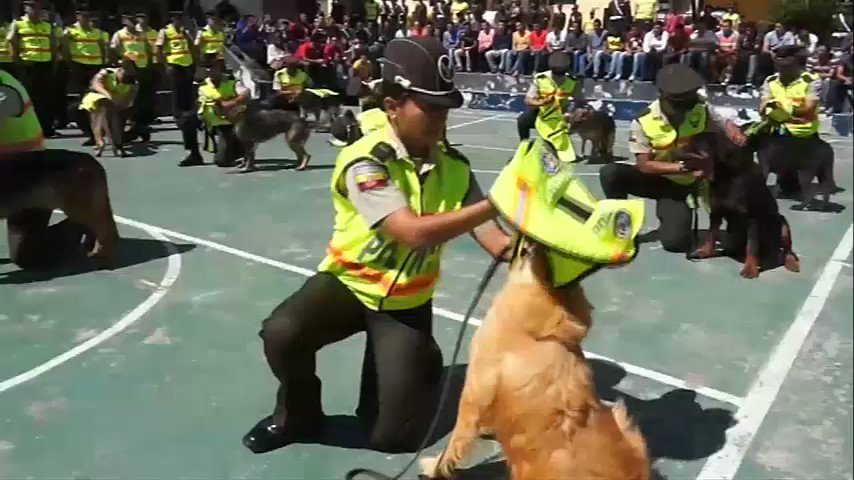 Police dogs in Ecuador received their last salutes before going into retirement.  Good job! 🐶