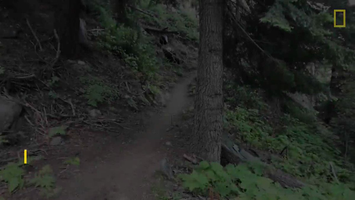 While walking to their campsite, two hikers thought they'd seen the last of this cougar—and then they looked up https://t.co/GcrIJNg3bx