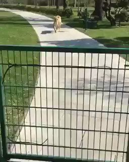 This woman raised 2 Lion cubs but had 2 give them up 2 the zoo;this is what happened when she saw them again grown https://t.co/BtW713LYAq