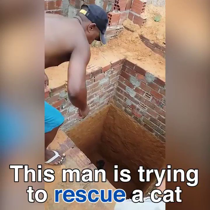 This cat rescue has a hilarious twist!