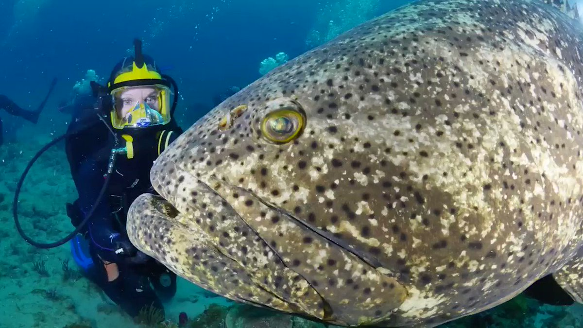 self proclaimed grouper capital of the world - 1200×675