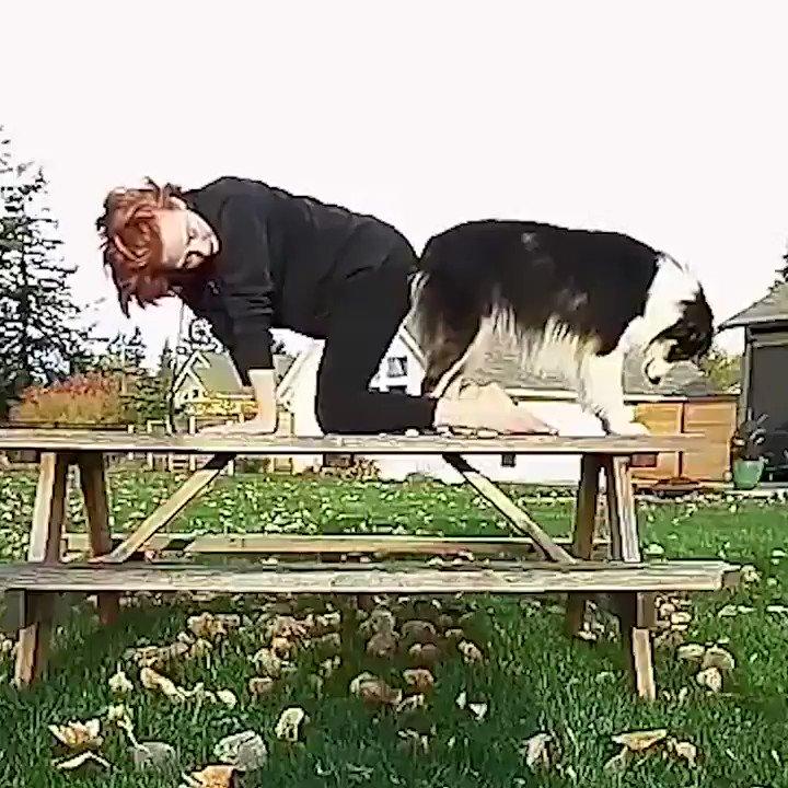 RT @babyanimaIsvids: An excellent downward facing dog. 🐶 https://t.co/ejMBttzYAv