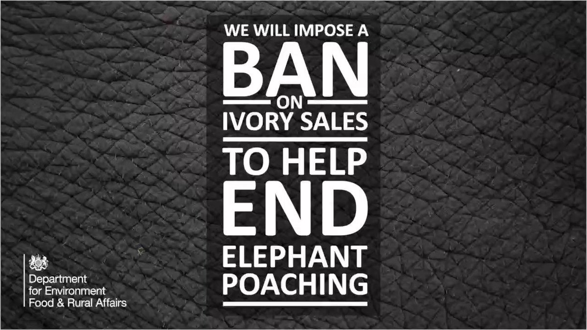 Today @michaelgove is announcing proposals for an #ivoryban to bring an end to #elephant poaching https://t.co/dIs3P4iHFo