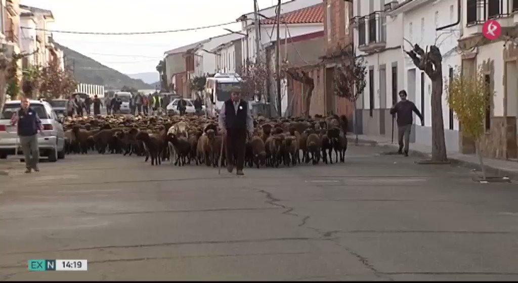 La comarca de @CederLaSiberia ha vuelto a revindicar el valor de la trashumancia y la ganadería. 800 ovejas han tomado sus calles🐑🐏. #EXN https://t.co/xViEgHQgZW