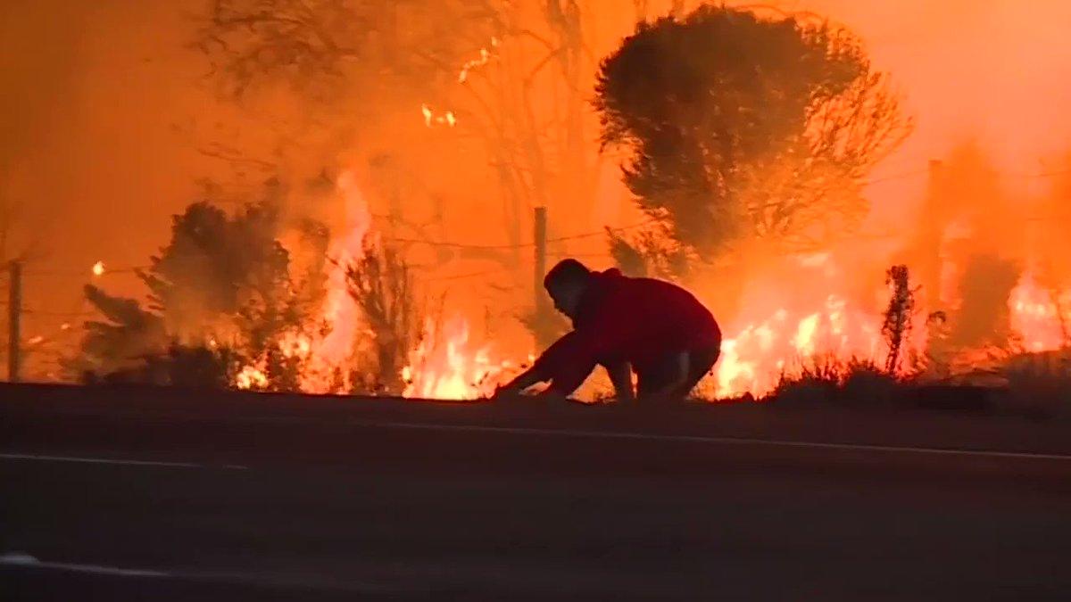 En Californie, cet homme sauve un lapin des flammes 🐰😱