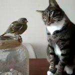 ありえないくらいソフトタッチ鳥に触りたい猫が可愛すぎる