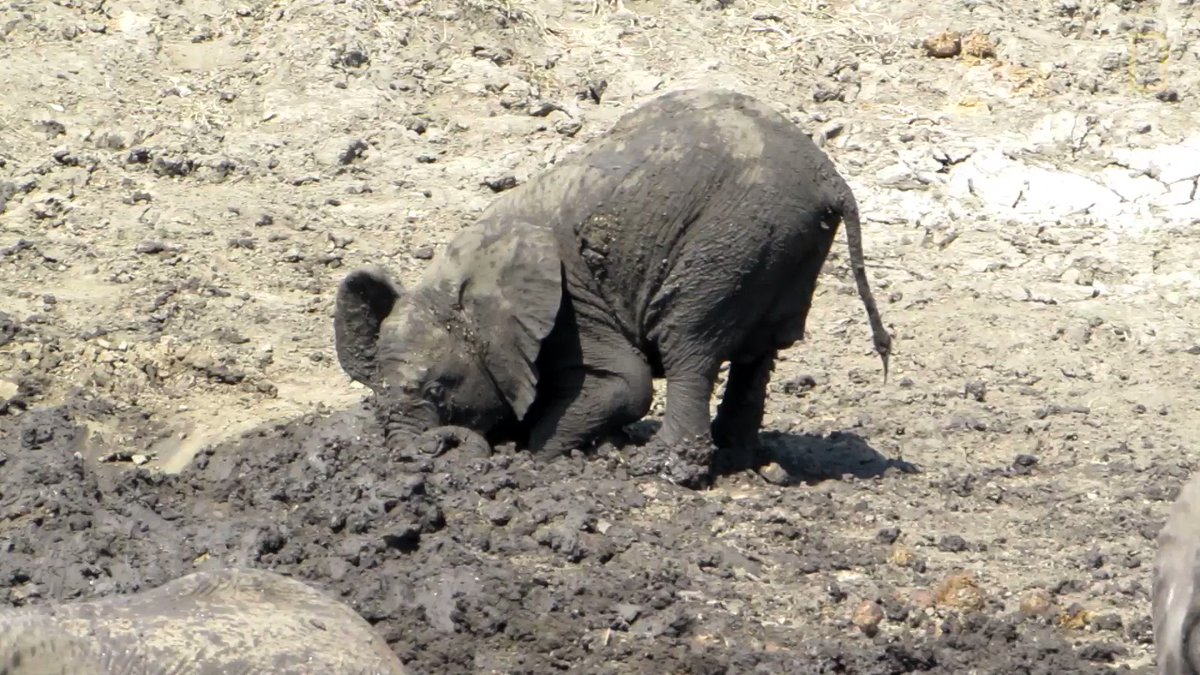 National Geographic's photo on #WorldElephantDay