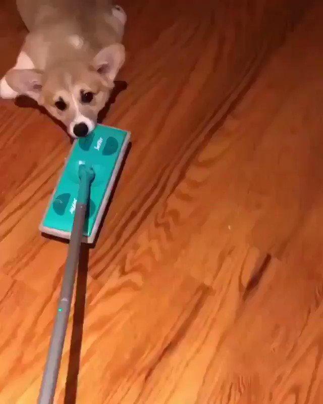 こうやって掃除の邪魔してくる
