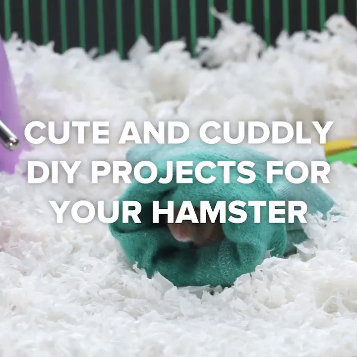 Cute and cuddly projects for your hamster 🐹