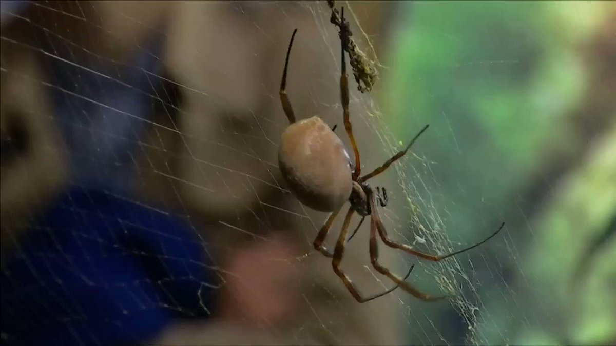 The London Zoo has helped over 5,000 arachnophobes face their fears with this program https://t.co/b4KVfgP1ix