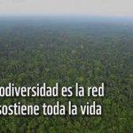 #DiaMundialBiodiversidad